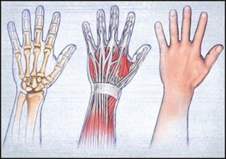 болят суставы пальцев кисти