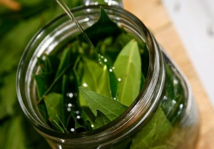 отвар лавровых листьев для суставов